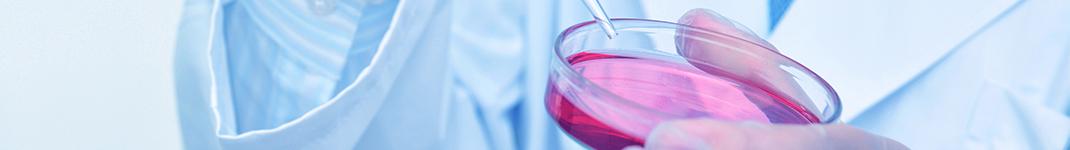 安定遺伝子発現細胞株構築